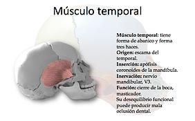 ejercicio terapeutico musculo temporal