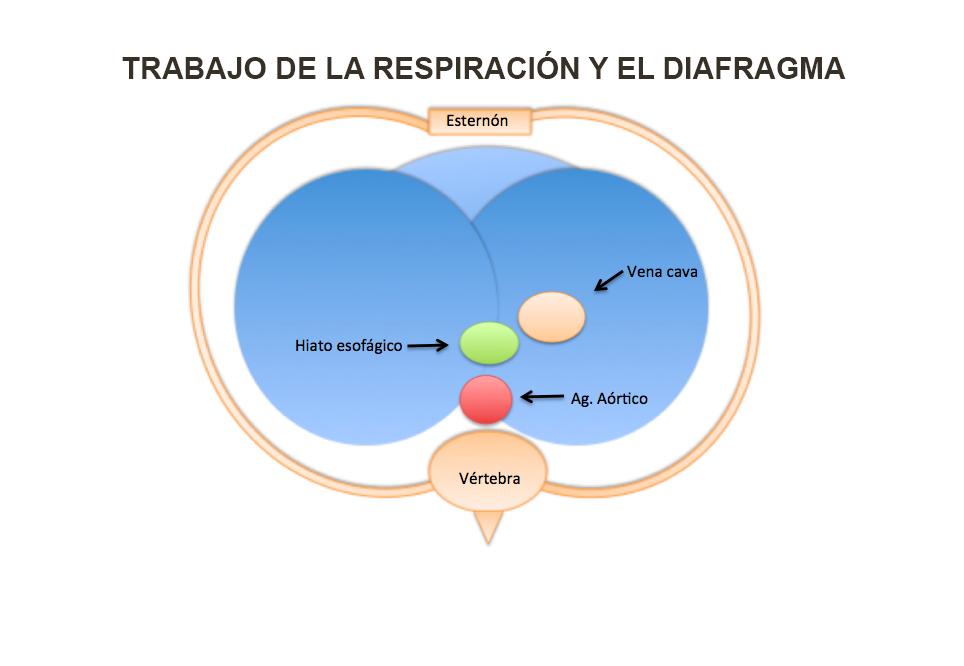 EJERCICIOS PARA RESPIRAR MEJOR | EJERCICIO TERAPÉUTICO