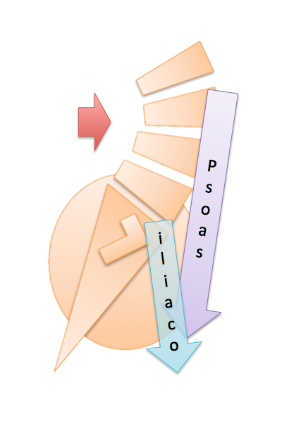 Biomecánica Psoas iliaco
